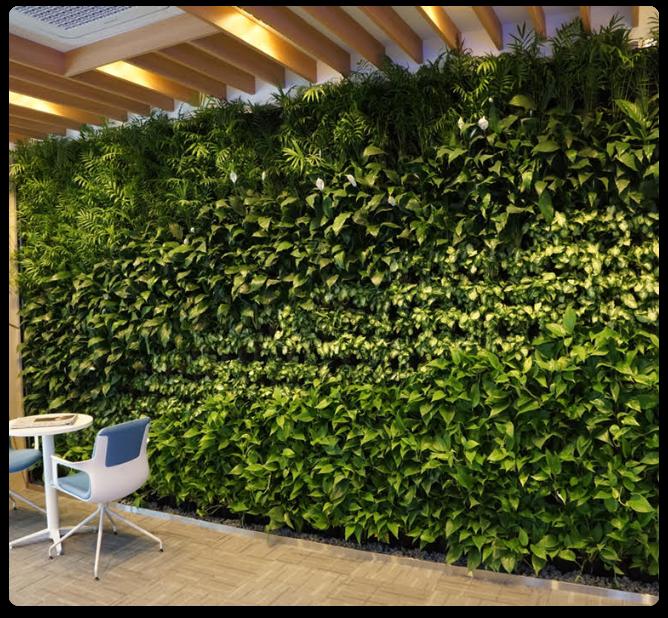 Muro Verde para oficina